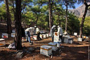 Μελισσοκόμοι στο δάσος Σελάκανου